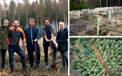 1.000 Bäume für Deutschland – Bäume pflanzen gegen den Klimawandel